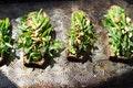 Avocado Asparagus Tartine
