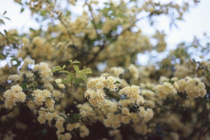 Spring Favorites 2008