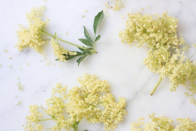 Elderflower and Coriander Vodka Recipe